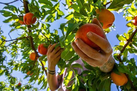 Aide exceptionnelle pour les saisonniers et les salariés du secteur agricole en difficulté
