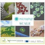 Microphyt construit à Baillargues la première bioraffinerie industrielle de microalgues au monde.